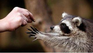Успей сходить в зоопарк! Билеты на 30 или 45 минут посещения «Планеты енотов» для одного или двоих!