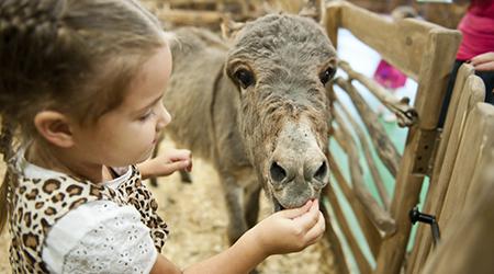 Скидка 50% на посещение контактного зоопарка Zoo-mini!